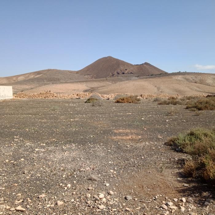 Tiscamanita Fuerteventura